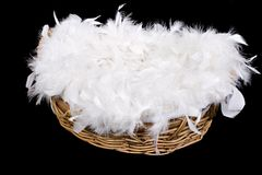 Basket of Feathers. Wicker basket filled with soft white feathers isolated on black background. Digital photography baby prop Royalty Free Stock Photo