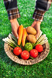 Basket with female hands holding  fresh vegetables Royalty Free Stock Photos