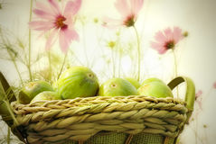 Basket of figs in the garden Royalty Free Stock Photography