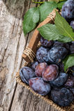 Basket filled with fresh Plums Royalty Free Stock Images