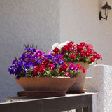 basket filled with pink petunias. Stock Photos