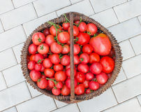 Basket filled with tomatoes Royalty Free Stock Photography