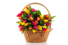 Basket filled with tulips Royalty Free Stock Images
