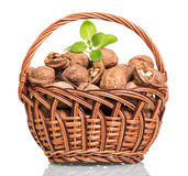 Basket filled with walnuts isolated on white Stock Image