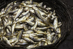 A basket of fishes Royalty Free Stock Photos