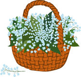 Basket of flowering lilies Royalty Free Stock Photo