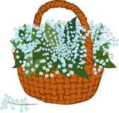 Basket of flowering lilies Royalty Free Stock Photo