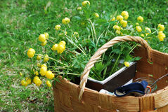 Basket of flowers. Yellow wild flowers in a woven basket on green grass Royalty Free Stock Photo