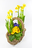 Basket with flowers. And white background royalty free stock photography