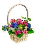 Basket of flowers. Isolated on white background Royalty Free Stock Image