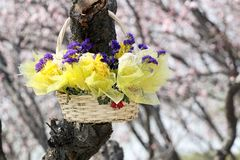 A basket of flowers. Hangs on the tree, the fresh flower has been already withered . (place: Graveyard Royalty Free Stock Photo