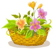Basket with flowers alstroemeria. Wattled basket with flowers alstroemeria and green leaves Royalty Free Stock Image