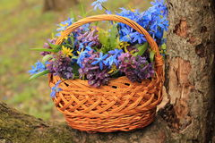 Basket of flowers in the forest Royalty Free Stock Image