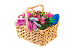 Basket flowers for gardening Stock Images