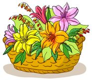 Basket with flowers lily. Wattled basket with flowers lily and green leaves Stock Photography