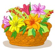 Basket with flowers lily Royalty Free Stock Photo