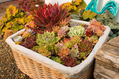 A basket of flowers Royalty Free Stock Photography