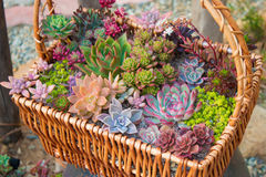 A basket of flowers Royalty Free Stock Image