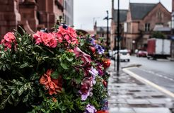 Flowers in the Rain in Wigan. A basket of flowers oute the town hall in Wigan in a rain storm Royalty Free Stock Photography