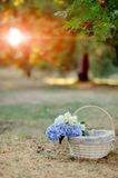 Basket with flowers Royalty Free Stock Photos