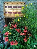 Basket with Flowers. Flowers and picnic basket Stock Images
