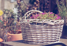 Basket of flowers in Provence Royalty Free Stock Photo
