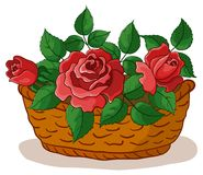 Basket with flowers roses. Wattled basket with flowers red roses and green leaves Royalty Free Stock Photo