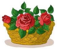 Basket with flowers roses Stock Image