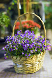 Basket of flowers. Stock Photos