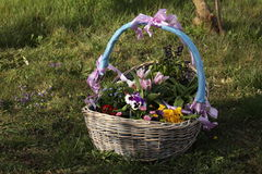 Basket with Flowers Stock Images