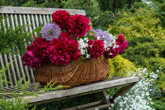 Basket with flowers. In the spring garden Royalty Free Stock Images