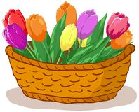Basket with flowers tulips. Wattled basket with flowers tulips and green leaves Stock Photos