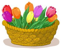 Basket with flowers tulips Royalty Free Stock Photo