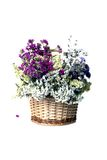 Basket with flowers on white. Background Royalty Free Stock Image