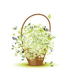 Basket with flowers for your design Royalty Free Stock Photos