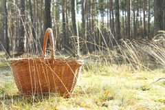 Basket in forest. Mushroom basket on sunny forest grass royalty free stock photos
