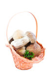 Basket with forest mushrooms Stock Photography