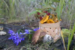 Basket with forest mushrooms Stock Photos