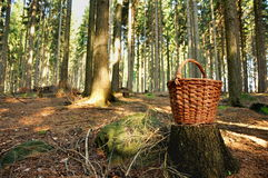 Basket in forest Royalty Free Stock Photography