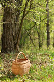 Basket in Forrest Royalty Free Stock Photo