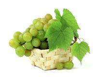Basket of fragrant grapes isolated on white. Bunches of ripe grapes with leaves and tendrils. Autumn harvest. Close-up. royalty free stock photos