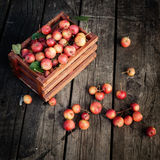 Basket of fresh apples of paradise on a wooden Royalty Free Stock Photo