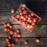 Basket of fresh apples of paradise on a wooden Stock Photos