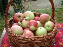Basket of fresh apples Stock Images