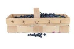 Basket of fresh blueberries Royalty Free Stock Photos