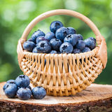 Basket with fresh blueberries Stock Images
