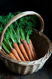A basket of fresh carrots Royalty Free Stock Photos