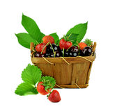 A basket of fresh cherries and strawberries with leaves. / Isola Stock Photo