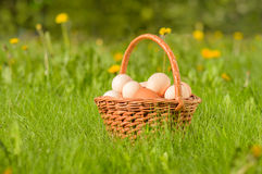 Basket with fresh chicken eggs on a  meadow Stock Images