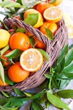 Basket of fresh citrus Stock Photos